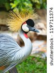 Close Up Of Grey Crowned Crane