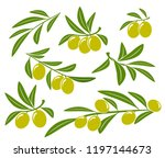 olive branches set with green... | Shutterstock .eps vector #1197144673