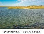 national seashore in cape cod... | Shutterstock . vector #1197165466