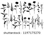 set of silhouettes of flowers... | Shutterstock .eps vector #1197175270