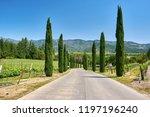 vineyards landscape in...   Shutterstock . vector #1197196240