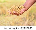 Close Up Of Jasmine Rice Seed...
