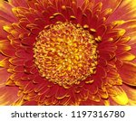 a red and gold flower macro... | Shutterstock . vector #1197316780