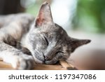 cute gray cat is sleeping on... | Shutterstock . vector #1197347086