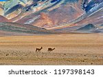 bolivia  salar de uyuni  deli...   Shutterstock . vector #1197398143