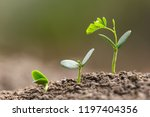 agriculture planting seeding... | Shutterstock . vector #1197404356