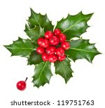 Christmas Holly Ilex Isolated...