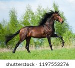 galloping bay color andalusian... | Shutterstock . vector #1197553276