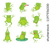 Cute Cartoon Frogs. Green...