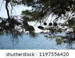 adriatic sea coast with pine... | Shutterstock . vector #1197556420