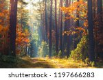 autumn forest. fall nature.... | Shutterstock . vector #1197666283
