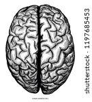 human cerebrum top view hand... | Shutterstock .eps vector #1197685453