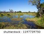 wildlife in the moremi game...   Shutterstock . vector #1197739750