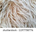 faux long fur of moon and pink... | Shutterstock . vector #1197758776