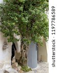 bran  brasov  transylvania ... | Shutterstock . vector #1197786589