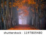 autumn fall. foggy morning in... | Shutterstock . vector #1197805480