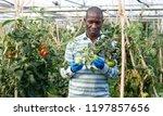 confident african american... | Shutterstock . vector #1197857656