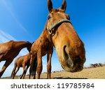 Funny Closeup Of A Horse   Wid...