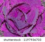a close up of a purple... | Shutterstock . vector #1197936703