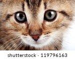Stock photo muzzle of a striped small kitten 119796163