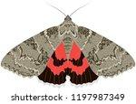 night moth catocala nupta | Shutterstock .eps vector #1197987349