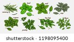 hand drawn culinary herbs and... | Shutterstock .eps vector #1198095400