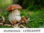 Mushroom In Forest Porcino ...