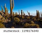 cactus on incahuasi island ...   Shutterstock . vector #1198176340
