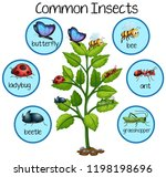 common insect on plant... | Shutterstock .eps vector #1198198696