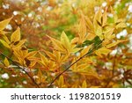 tree in a park in autumn ...   Shutterstock . vector #1198201519