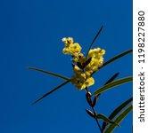 soft  beautiful  fluffy ... | Shutterstock . vector #1198227880