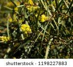 soft  beautiful  fluffy ... | Shutterstock . vector #1198227883
