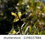 soft  beautiful  fluffy ... | Shutterstock . vector #1198227886