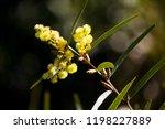 soft  beautiful  fluffy ... | Shutterstock . vector #1198227889
