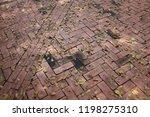 dry leave on red tile | Shutterstock . vector #1198275310