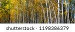beautiful autumn birch grove on ... | Shutterstock . vector #1198386379