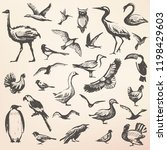 birds big hand drawn collection ... | Shutterstock .eps vector #1198429603