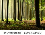 sunny morning in the forest | Shutterstock . vector #1198463410