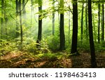 sunny morning in the forest | Shutterstock . vector #1198463413