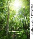 Footpath Between Trees In Gree...