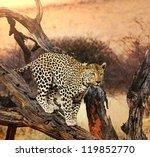 leopard closeup | Shutterstock . vector #119852770