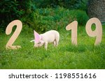 view of pink pig eating grass ... | Shutterstock . vector #1198551616