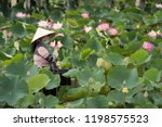 vietnamese padding the the... | Shutterstock . vector #1198575523