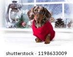 Puppy Dachshund  Christmas Dog...