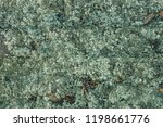 Background Of Gray  Green Moss  ...