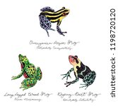 hand drawn colored frog set... | Shutterstock . vector #1198720120