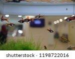 Colourful Fishes Inside Aquarium