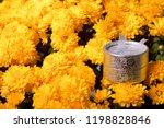 autumn flowers in a pot. yellow ...   Shutterstock . vector #1198828846