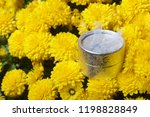 autumn flowers in a pot. yellow ...   Shutterstock . vector #1198828849