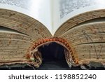 old book spine open vintage... | Shutterstock . vector #1198852240